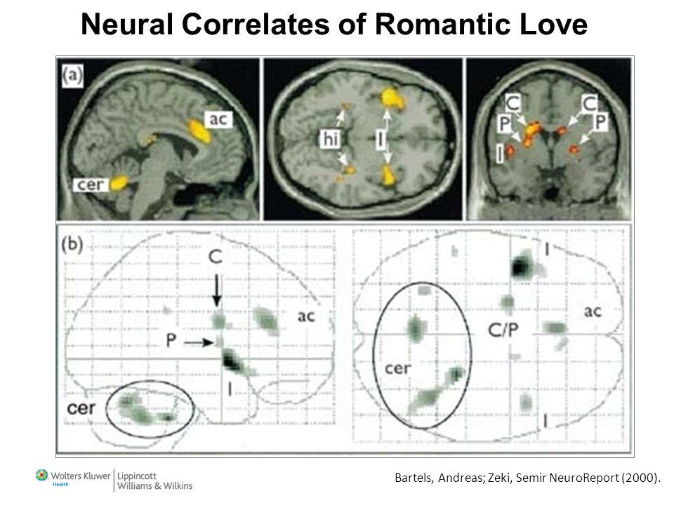 Bartels, Andreas; Zeki, Semir NeuroReport (2000). Neural Correlates of Romantic Love