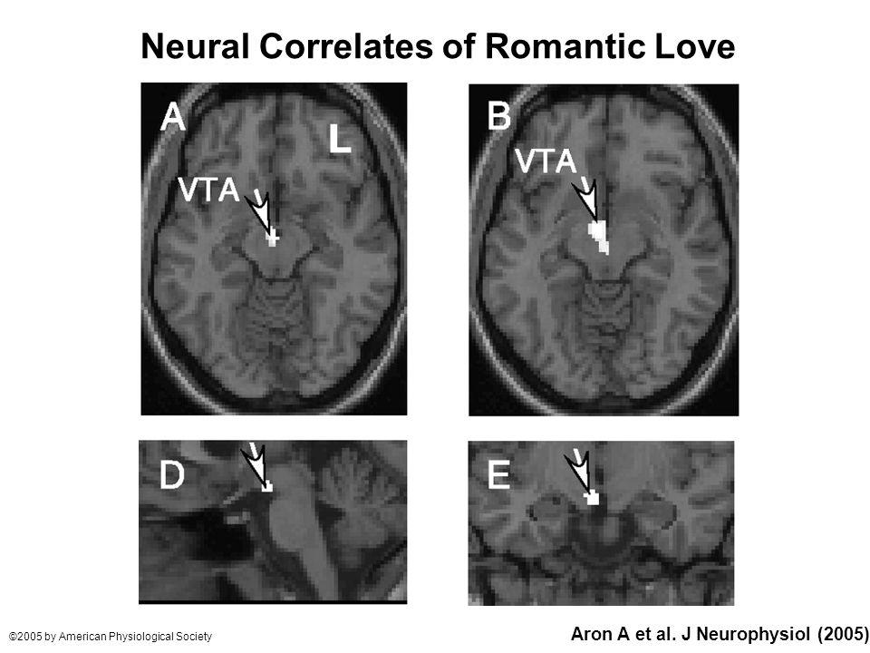 Aron A et al. J Neurophysiol (2005) ©2005 by American Physiological Society