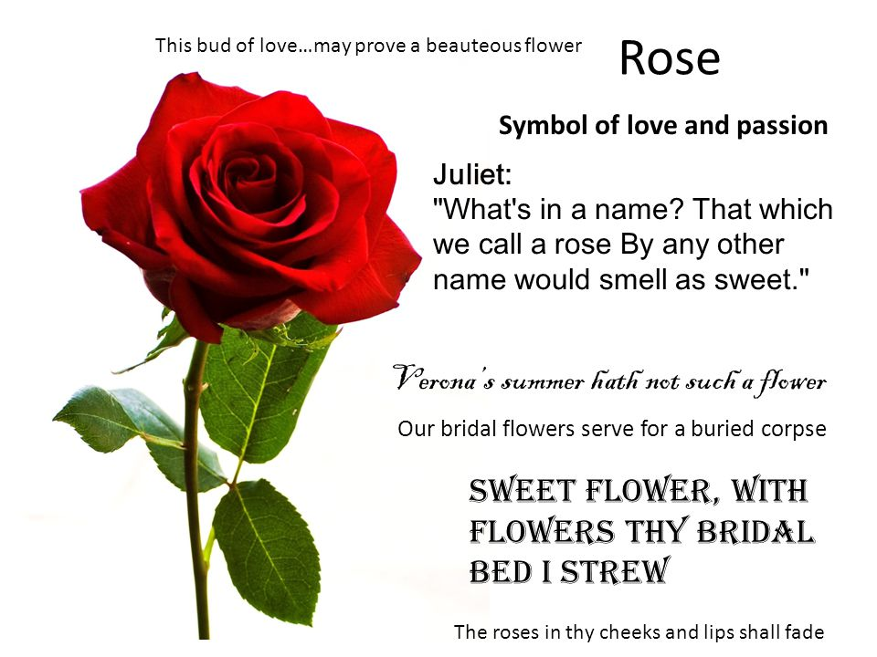 Rose Juliet: What s in a name.