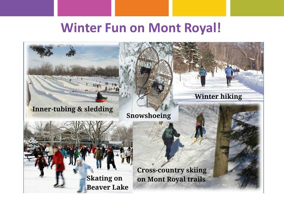 Winter Fun on Mont Royal!
