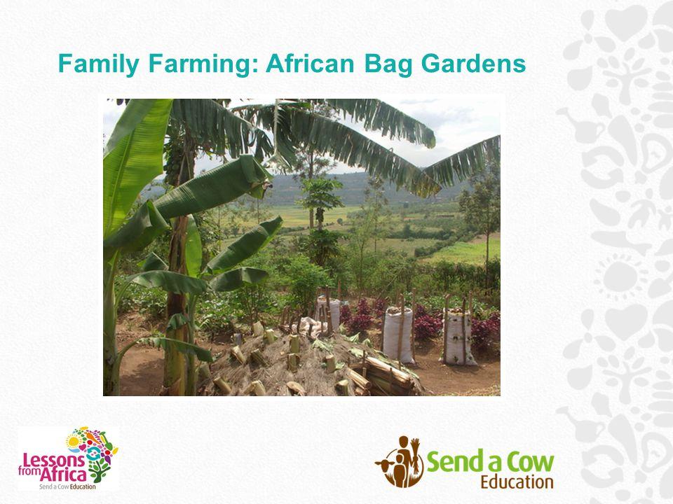 Family Farming: African Bag Gardens
