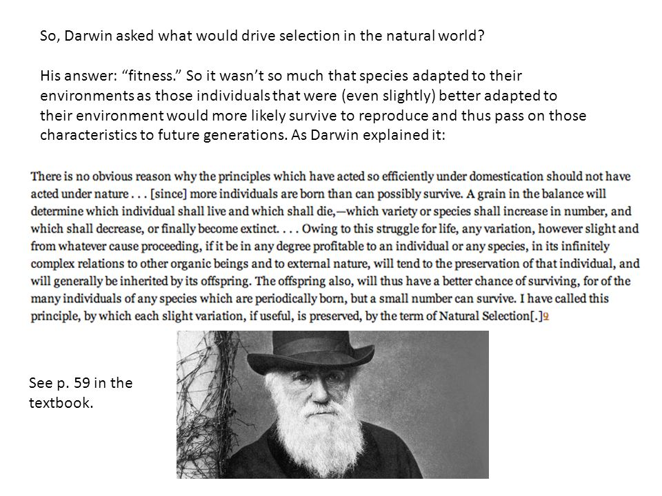 """So, Darwin asked what would drive selection in the natural world? His answer: """"fitness."""" So it wasn't so much that species adapted to their environmen"""