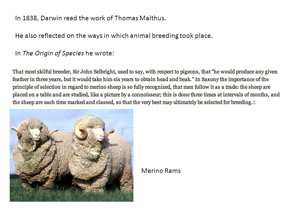 In 1838, Darwin read the work of Thomas Malthus.