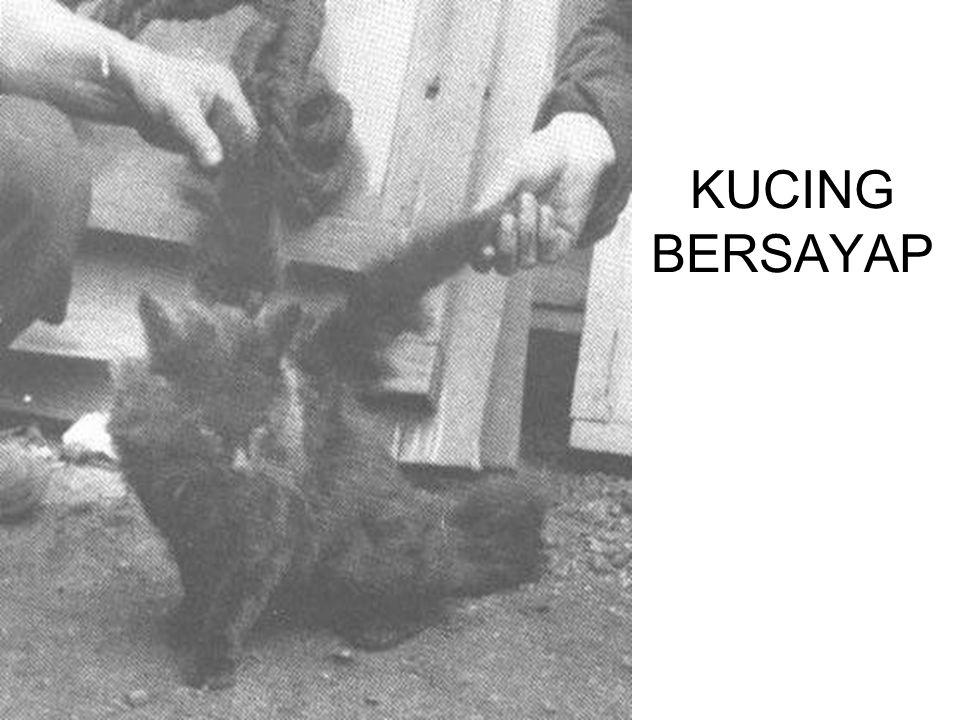 KUCING BERSAYAP