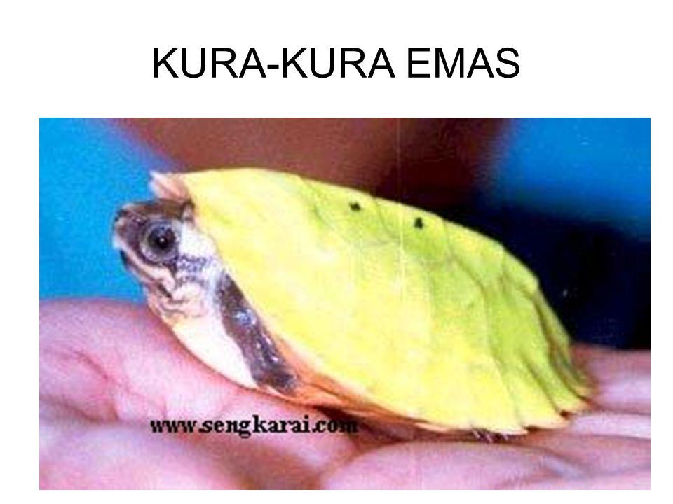 KURA-KURA EMAS