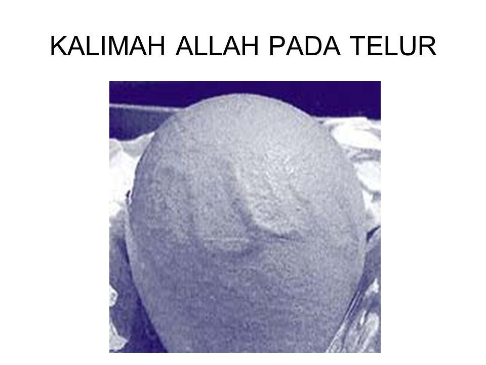 KALIMAH ALLAH PADA TELUR