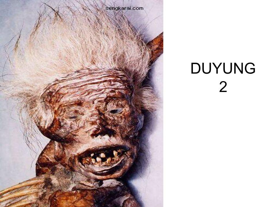 DUYUNG 2