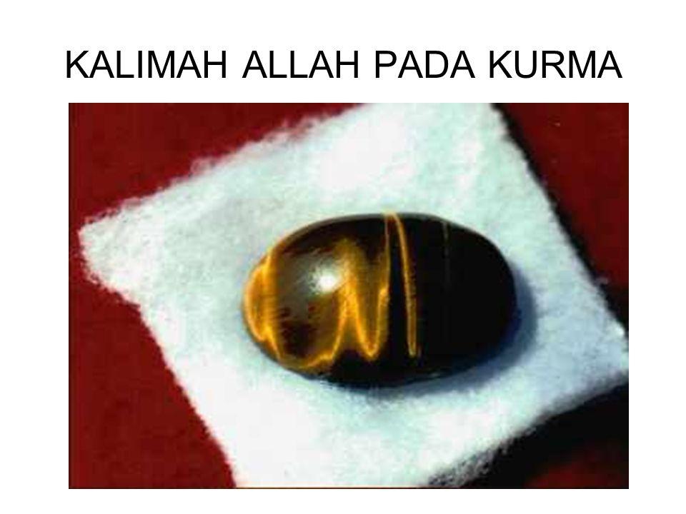 KALIMAH ALLAH PADA KURMA