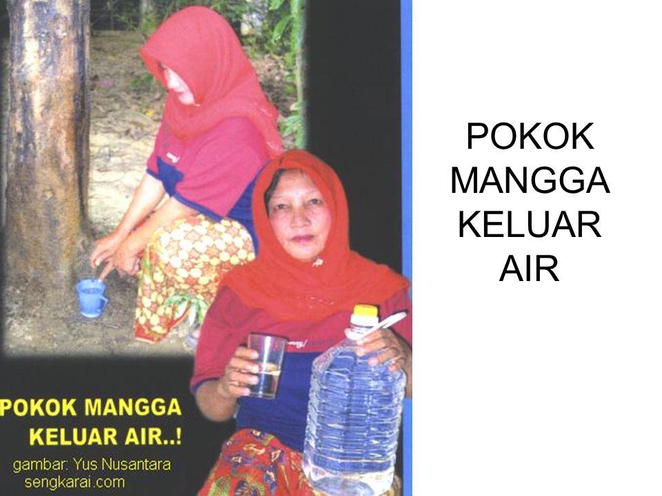 POKOK MANGGA KELUAR AIR