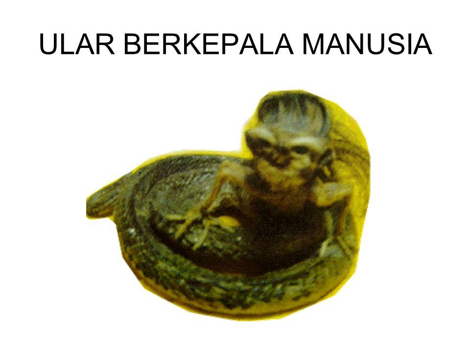 ULAR BERKEPALA MANUSIA