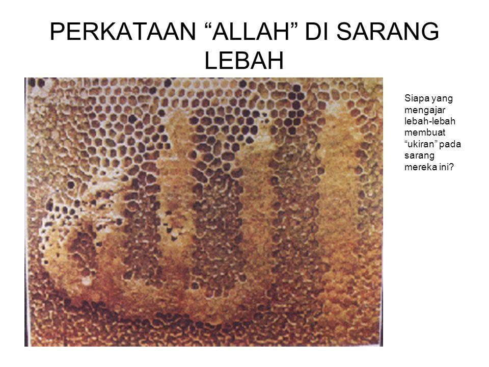 PERKATAAN ALLAH DI SARANG LEBAH Siapa yang mengajar lebah-lebah membuat ukiran pada sarang mereka ini