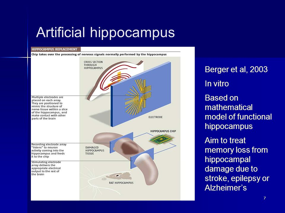 7 Artificial hippocampus Berger et al, 2003 In vitro Based on mathematical model of functional hippocampus Aim to treat memory loss from hippocampal d