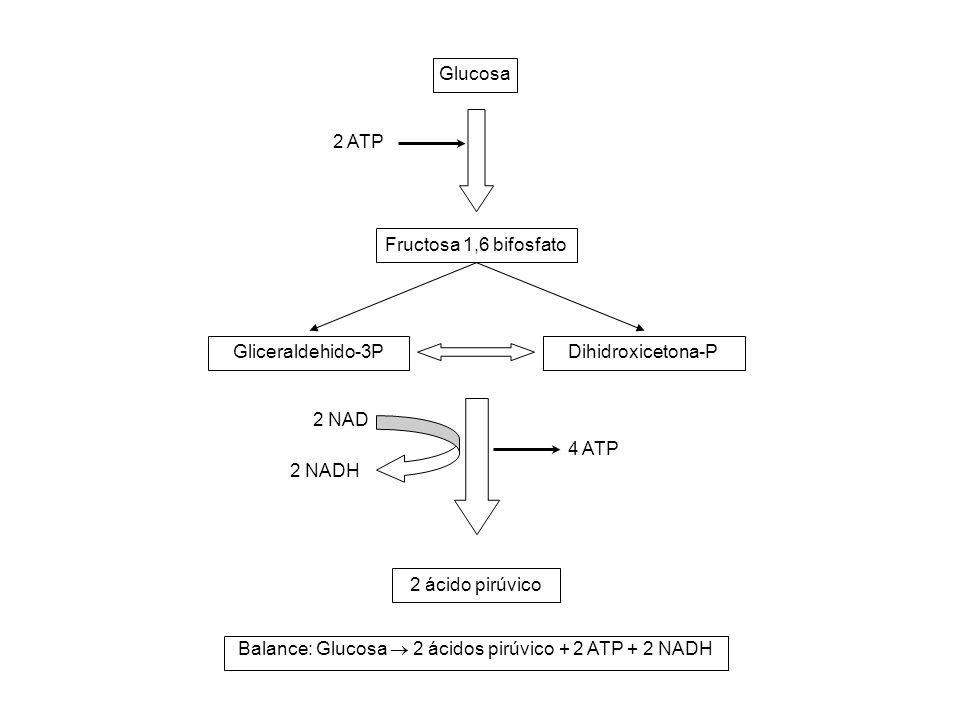 Glucosa Fructosa 1,6 bifosfato Gliceraldehido-3PDihidroxicetona-P 2 ácido pirúvico 2 ATP 4 ATP 2 NAD 2 NADH Balance: Glucosa  2 ácidos pirúvico + 2 A