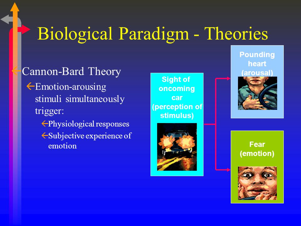 ßCannon-Bard Theory ßEmotion-arousing stimuli simultaneously trigger: ßPhysiological responses ßSubjective experience of emotion Sight of oncoming car