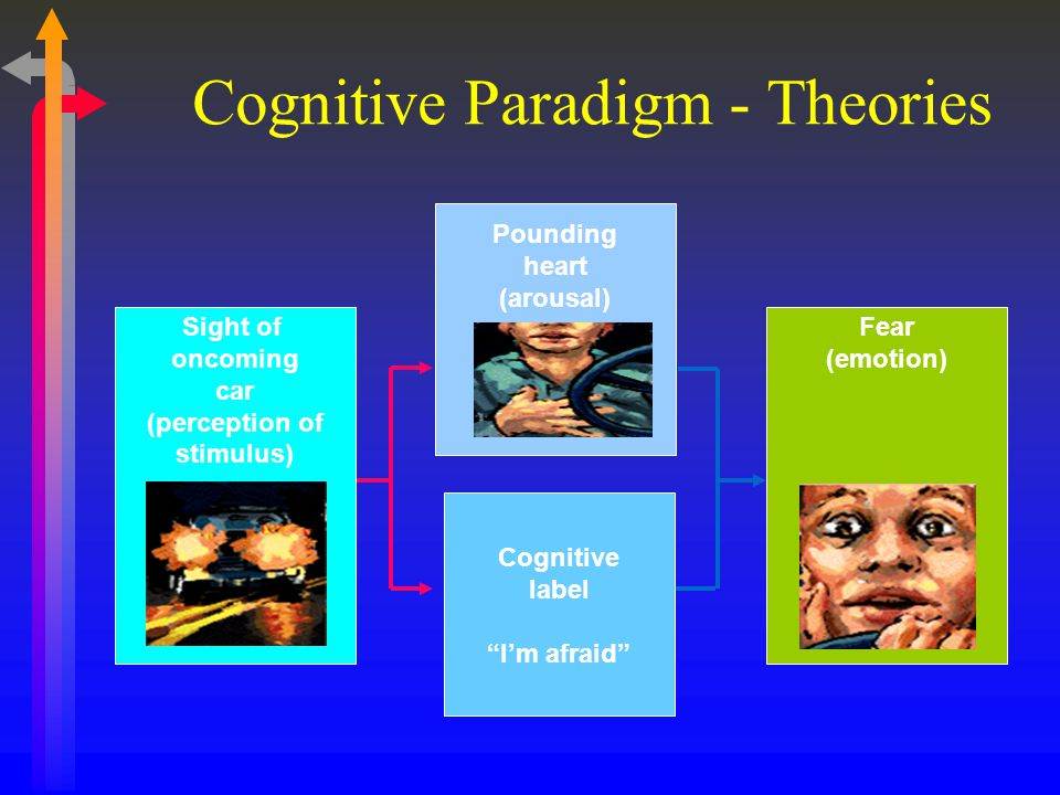 """Cognitive Paradigm - Theories Cognitive label """"I'm afraid"""" Fear (emotion) Sight of oncoming car (perception of stimulus) Pounding heart (arousal)"""