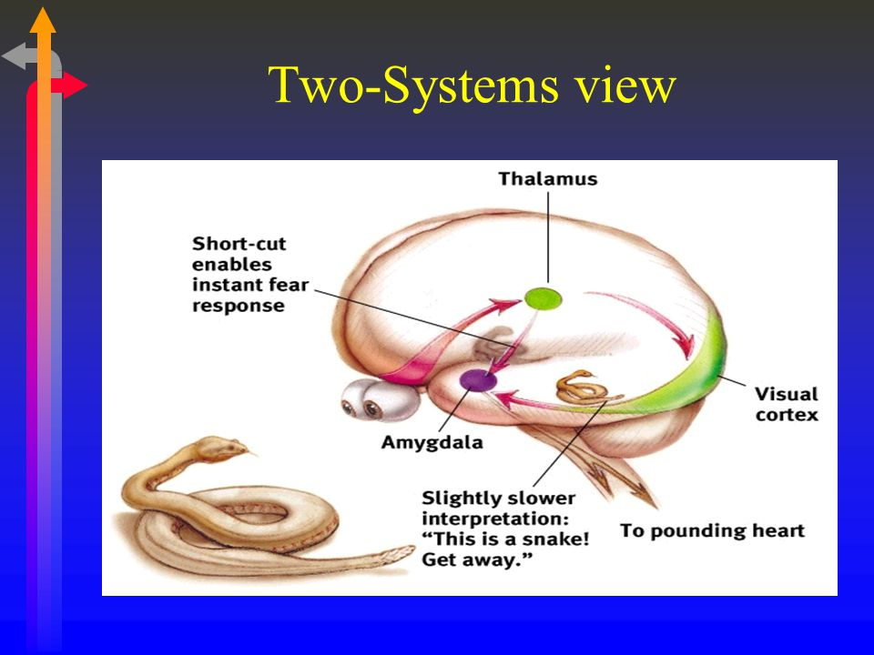 Two-Systems view