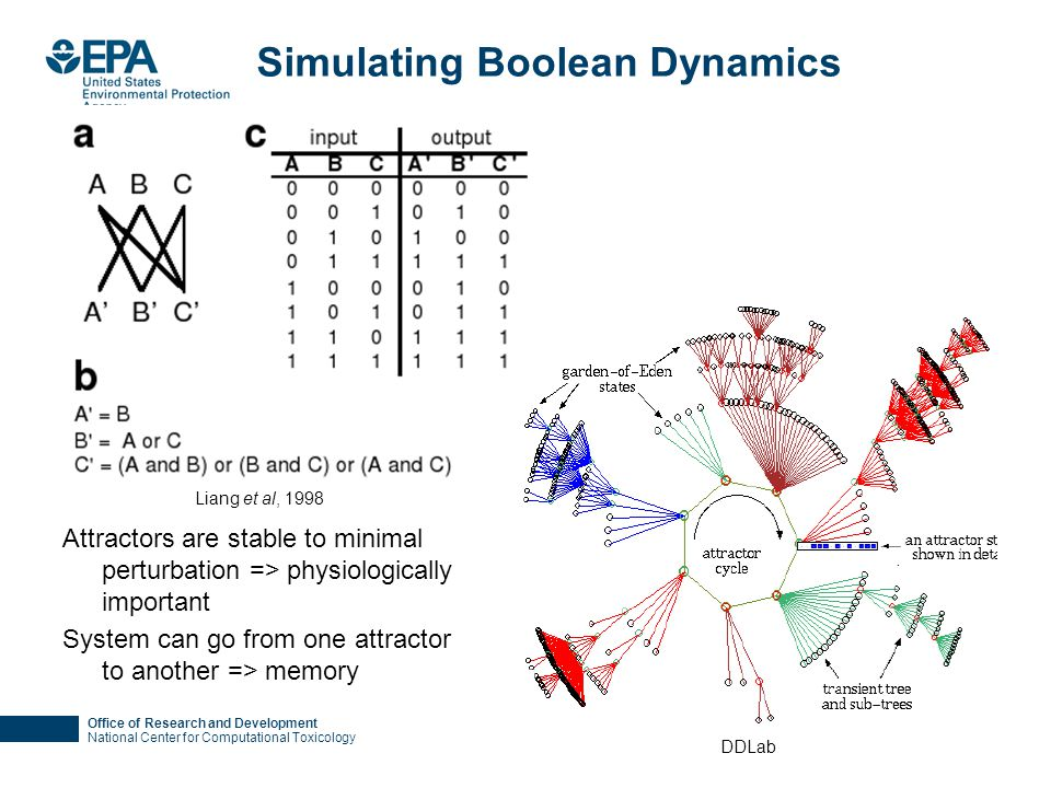 Office of Research and Development National Center for Computational Toxicology Simulating Boolean Dynamics Attractors are stable to minimal perturbat