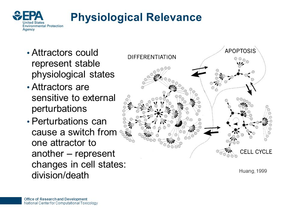 Office of Research and Development National Center for Computational Toxicology Physiological Relevance Attractors could represent stable physiological states Attractors are sensitive to external perturbations Perturbations can cause a switch from one attractor to another – represent changes in cell states: division/death Huang, 1999