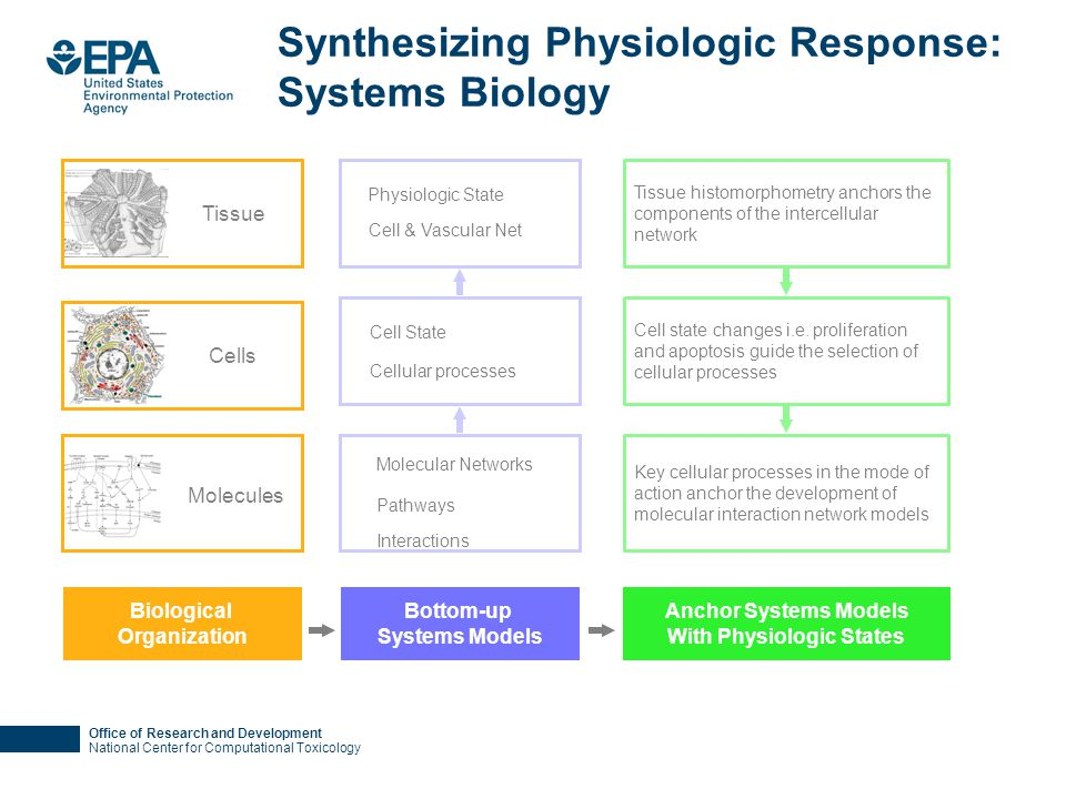 Office of Research and Development National Center for Computational Toxicology Synthesizing Physiologic Response: Systems Biology Key cellular proces