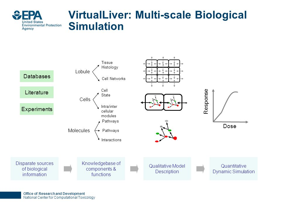 Office of Research and Development National Center for Computational Toxicology VirtualLiver: Multi-scale Biological Simulation Knowledgebase of compo
