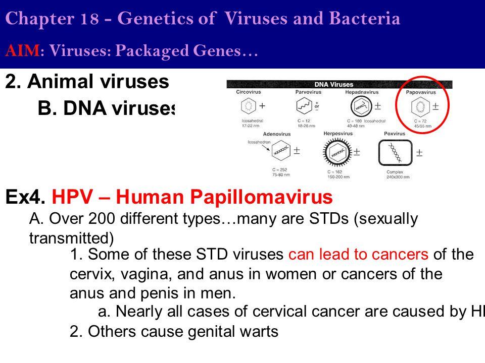 Chapter 18 - Genetics of Viruses and Bacteria AIM: Viruses: Packaged Genes… 2. Animal viruses B. DNA viruses Ex4. HPV – Human Papillomavirus 1. Some o