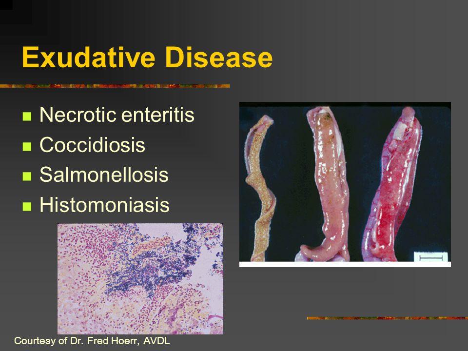Exudative Disease Necrotic enteritis Coccidiosis Salmonellosis Histomoniasis Courtesy of Dr. Fred Hoerr, AVDL