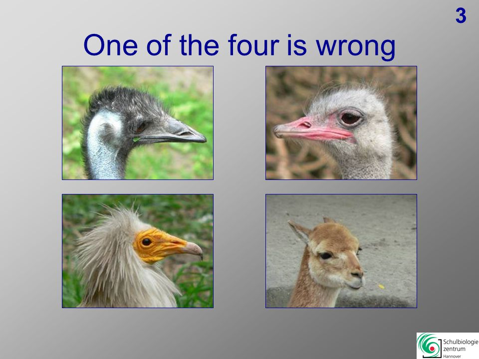 One of the four is wrong 13
