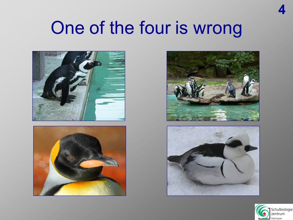 One of the four is wrong 14