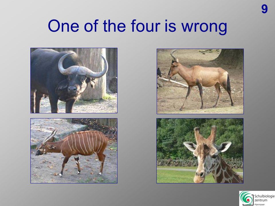 Eins der Vier ist falsch 19