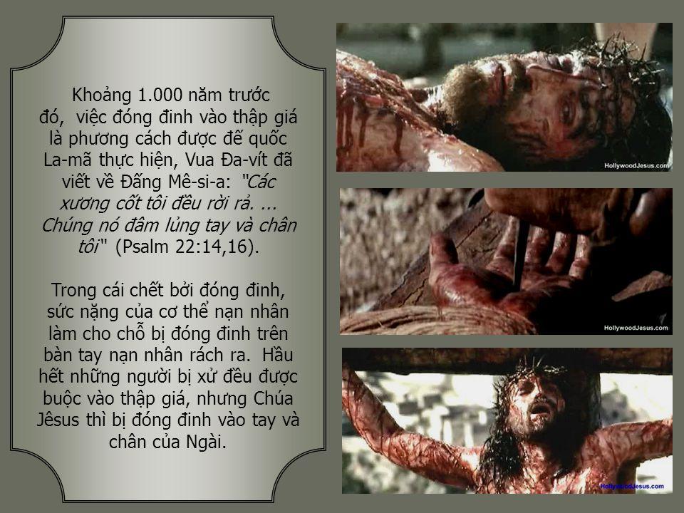 Lời tiên tri: Ngài như chiên con bị dắt đến hàng làm thịt, như chiên câm ở trước mặt kẻ hớt lông, người chẳng từng mở miệng. (Isaiah 53:7).
