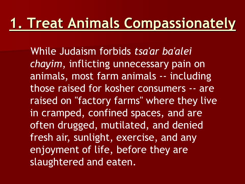 1. Treat Animals Compassionately While Judaism forbids tsa'ar ba'alei chayim, inflicting unnecessary pain on animals, most farm animals -- including t