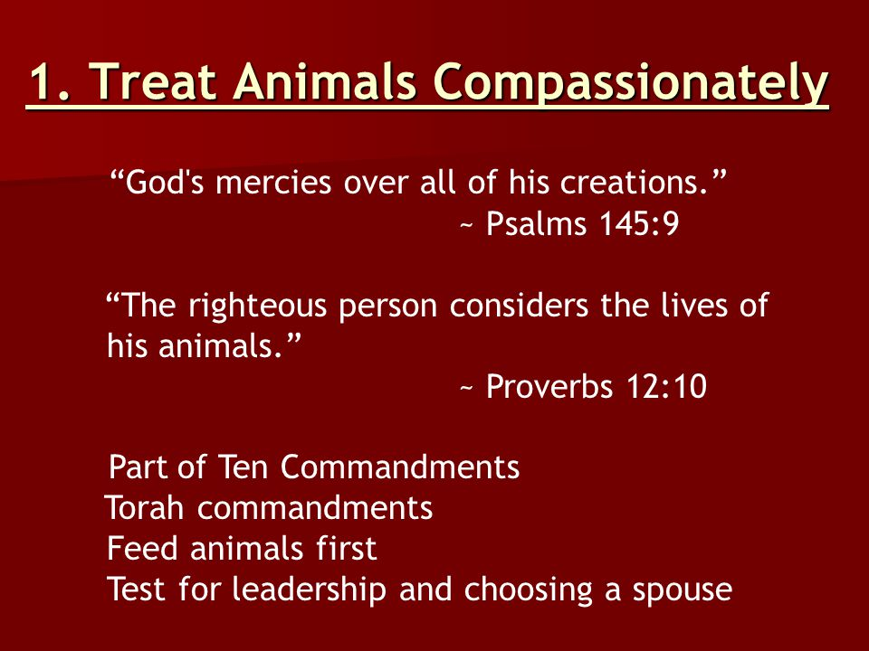 "1. Treat Animals Compassionately ""God's mercies over all of his creations."" ~ Psalms 145:9 ""The righteous person considers the lives of his animals."""