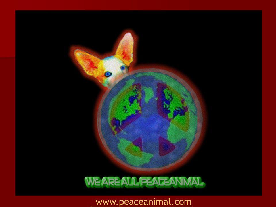 www.peaceanimal.com