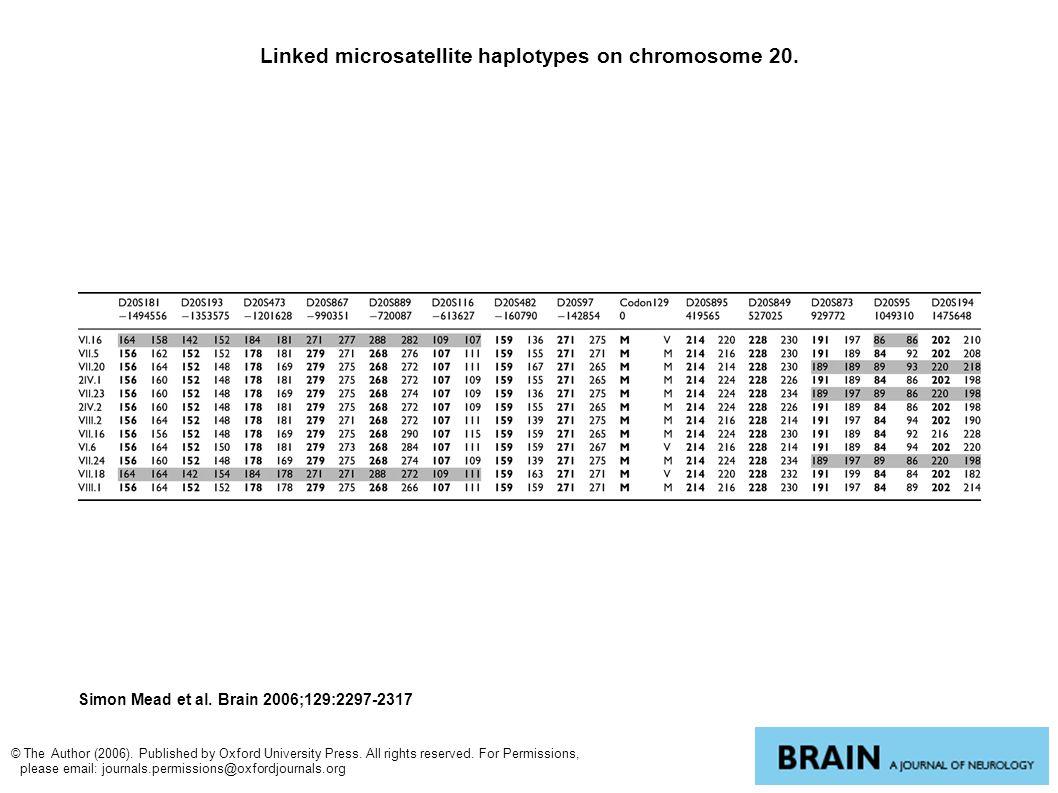 Linked microsatellite haplotypes on chromosome 20.