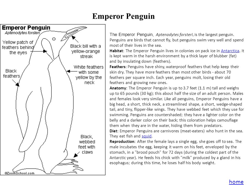 Web links Emperor Penguin Wikkipedia page Kids National Geographic Save the Egg Corwin's Quest- Mangrove Mudskipper Mudskipper home