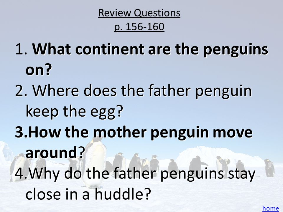 """Review Questions p. 161-167 5.How do penguins """"talk"""" to each other? 6.Where does the father go? 7.What is a group of chicks called? 8. What do webbed"""