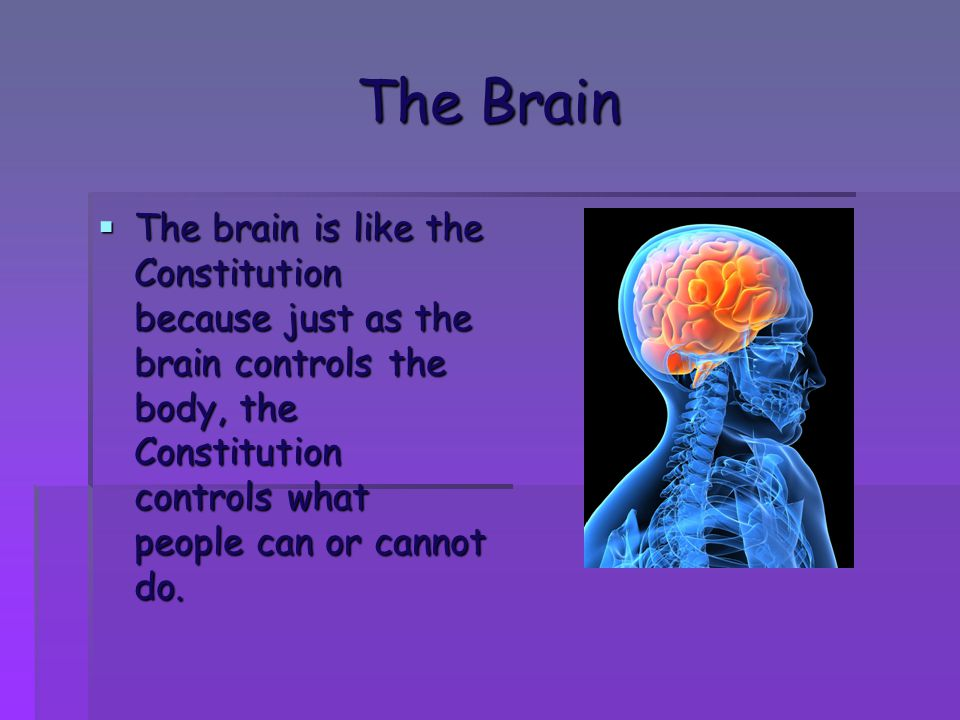 The Brain  The brain is like the Constitution because just as the brain controls the body, the Constitution controls what people can or cannot do.