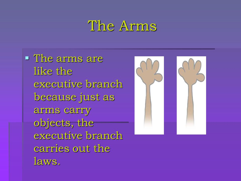 The Hands  The hands are like the legislative branch because just as hands help the body write, the legislative branch makes and writes laws.