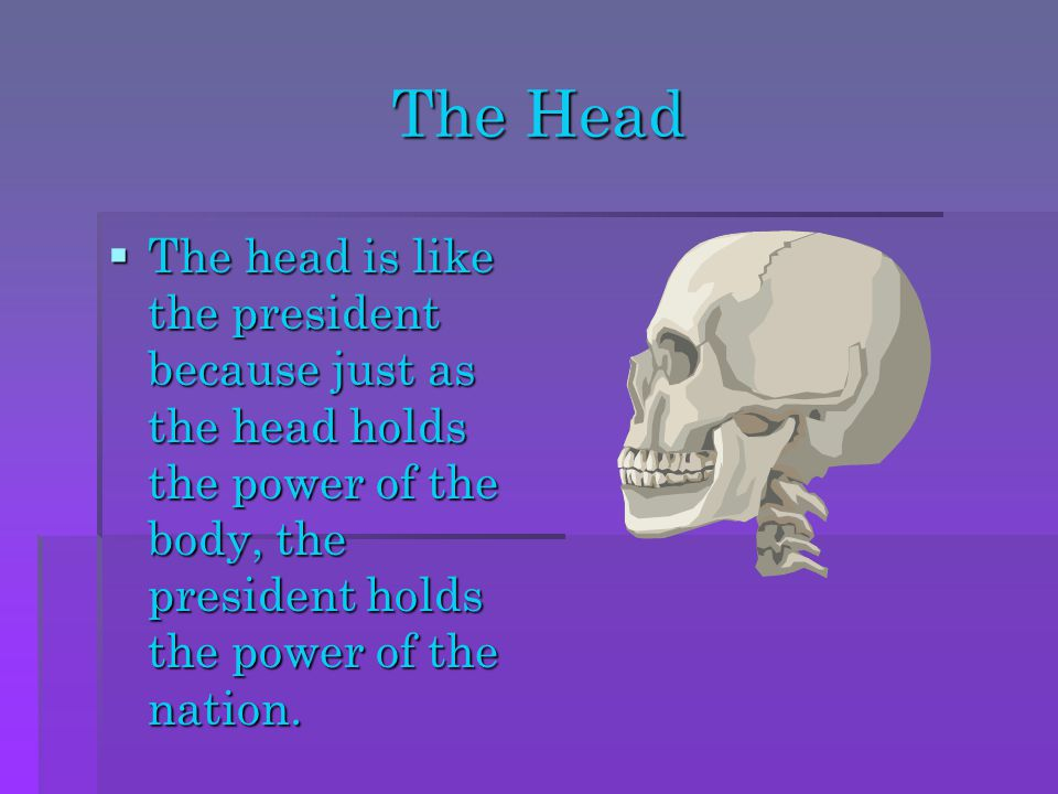 The Head  The head is like the president because just as the head holds the power of the body, the president holds the power of the nation.