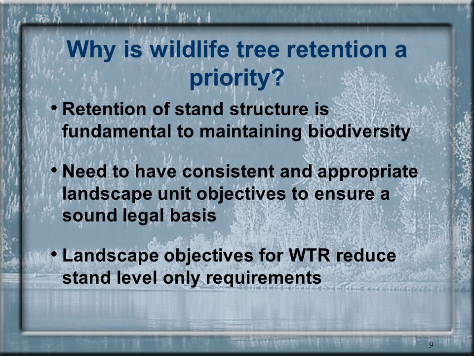 9 Why is wildlife tree retention a priority.