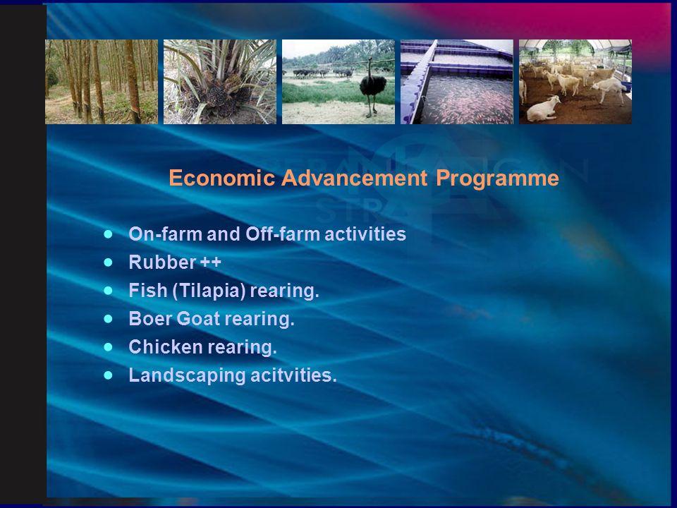 Commercial Economic Programme  Boer Goat rearing.