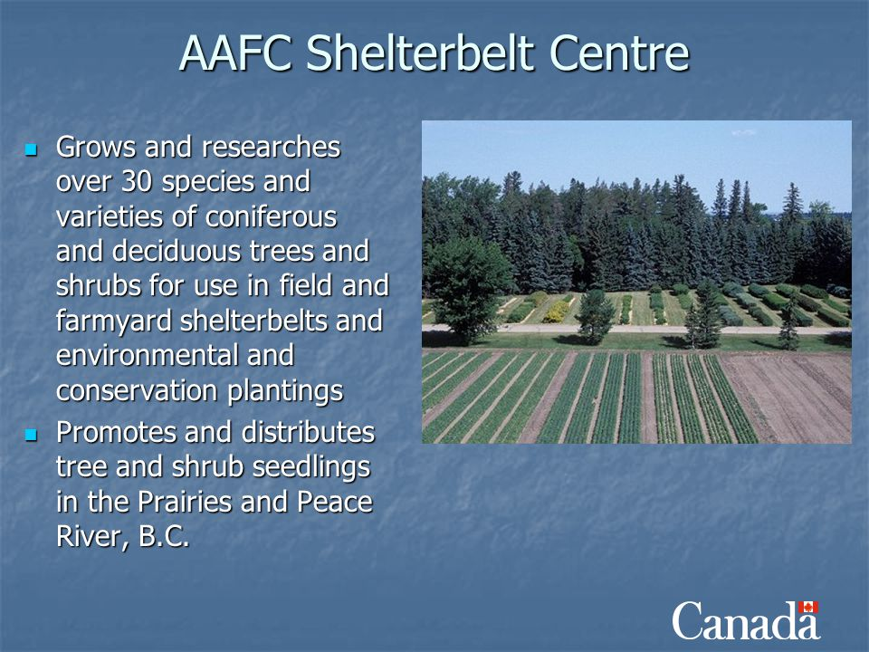 AAFC Shelterbelt Centre Grows and researches over 30 species and varieties of coniferous and deciduous trees and shrubs for use in field and farmyard