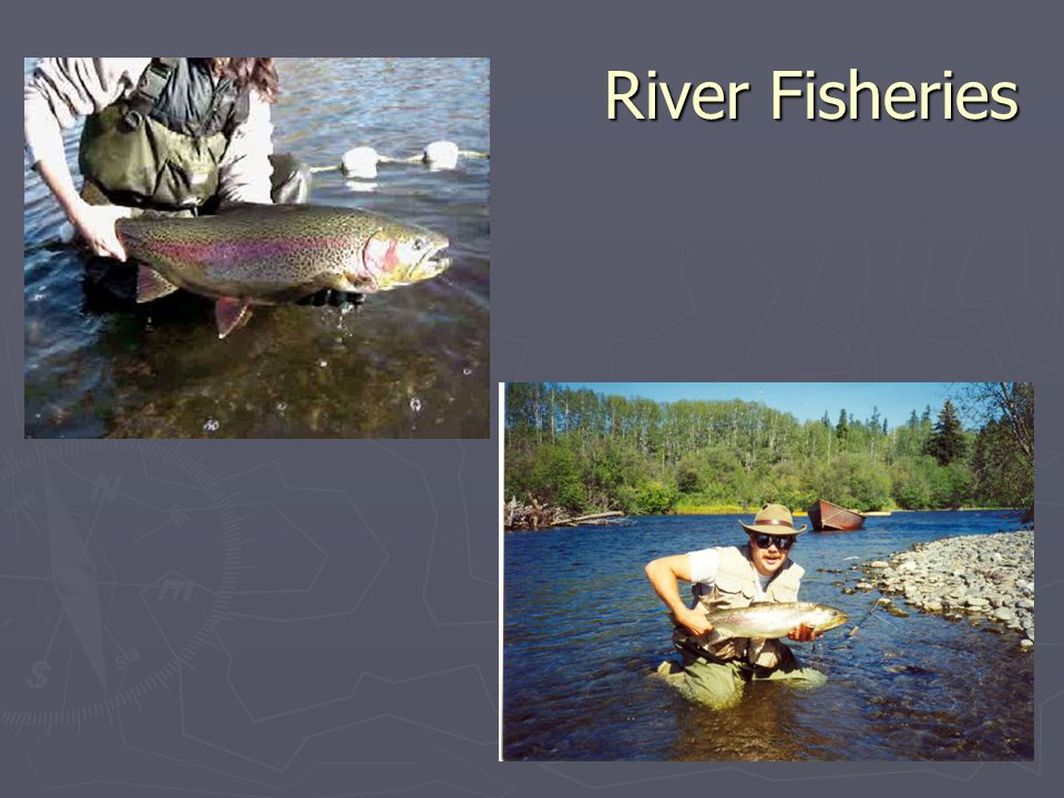 River Fisheries