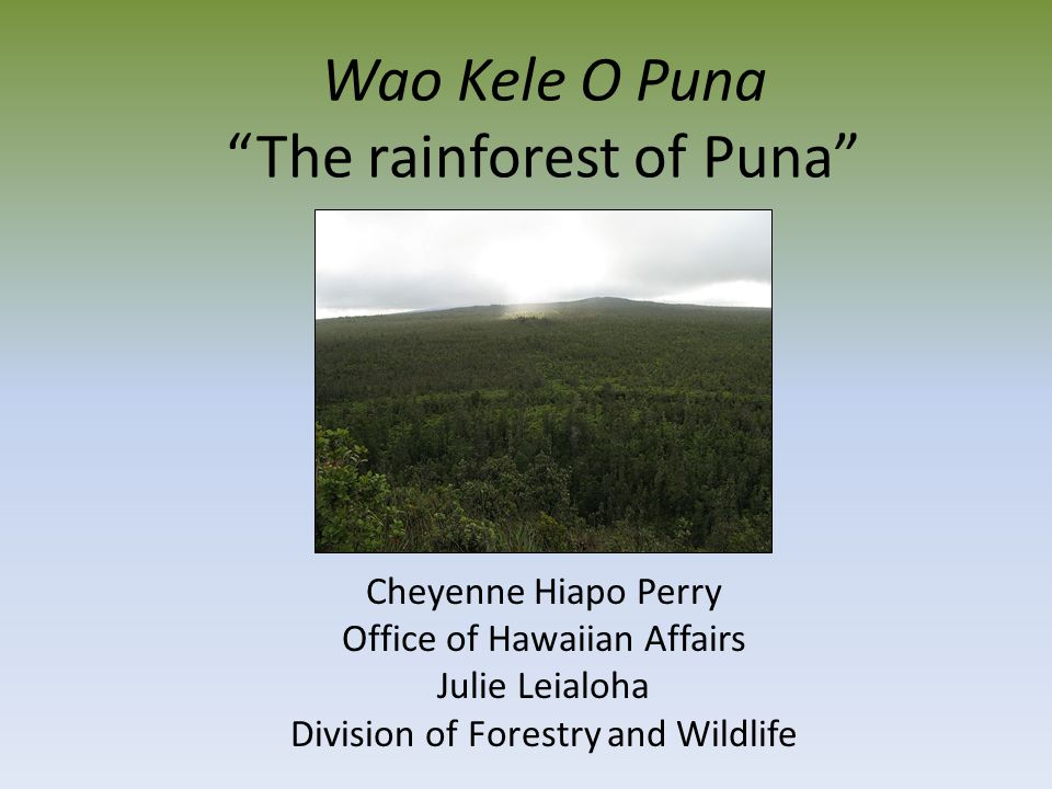 Wao Kele O Puna Eastern slope of Kilauea 25, 856 acres ~1000' to 2300' elevation Rainfall – 125 to 150 inches Age substrate in Puna – 1991 –A.D.