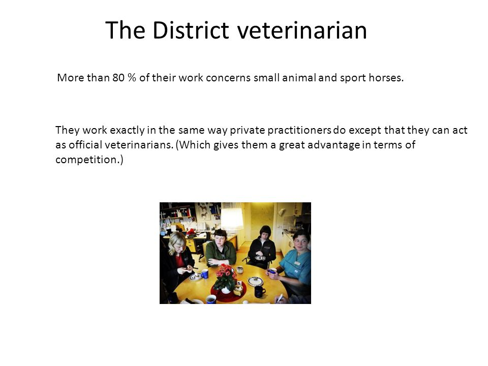 The District veterinarian More than 80 % of their work concerns small animal and sport horses. They work exactly in the same way private practitioners
