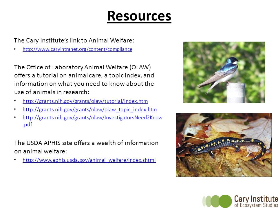 The Cary Institute's link to Animal Welfare: http://www.caryintranet.org/content/compliance The Office of Laboratory Animal Welfare (OLAW) offers a tu