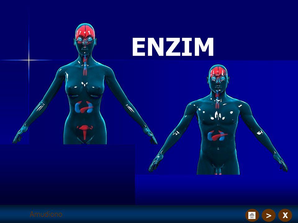 X> ENZIM Amudiono