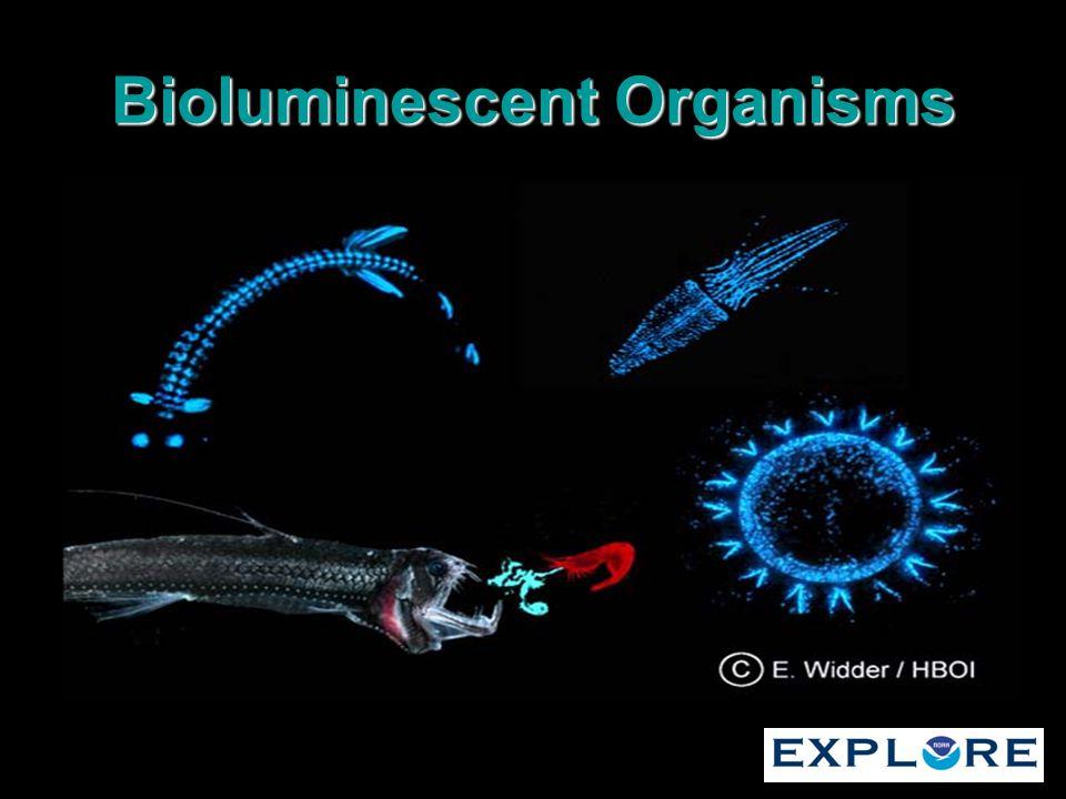 Bioluminescent Organisms