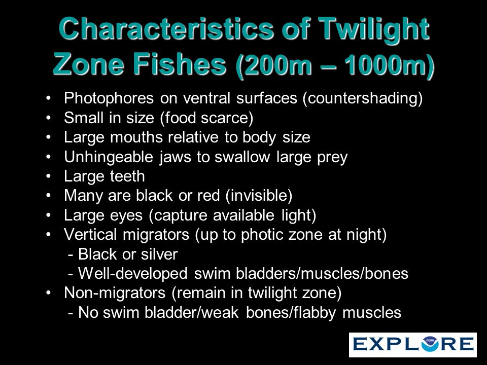 Characteristics of Twilight Zone Fishes (200m – 1000m) Photophores on ventral surfaces (countershading) Small in size (food scarce) Large mouths relat