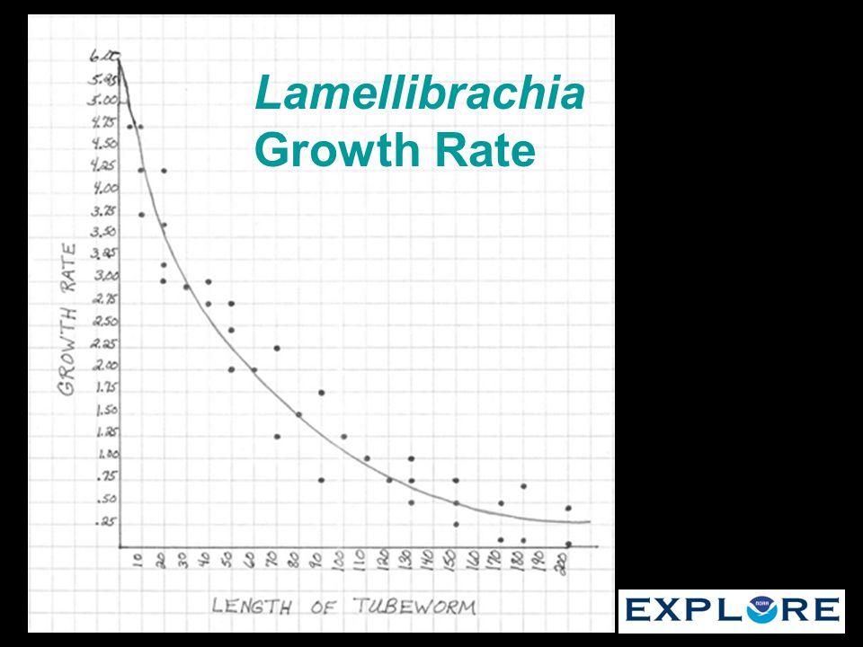 Lamellibrachia Growth Rate